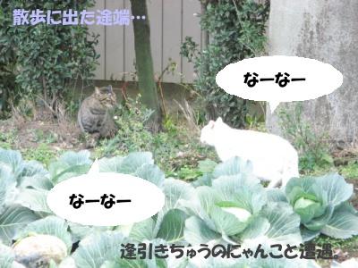 Ten_sanpo01_3