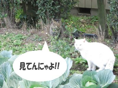 Ten_sanpo02