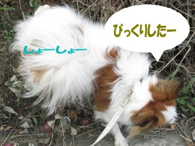 Ten_sanpo05